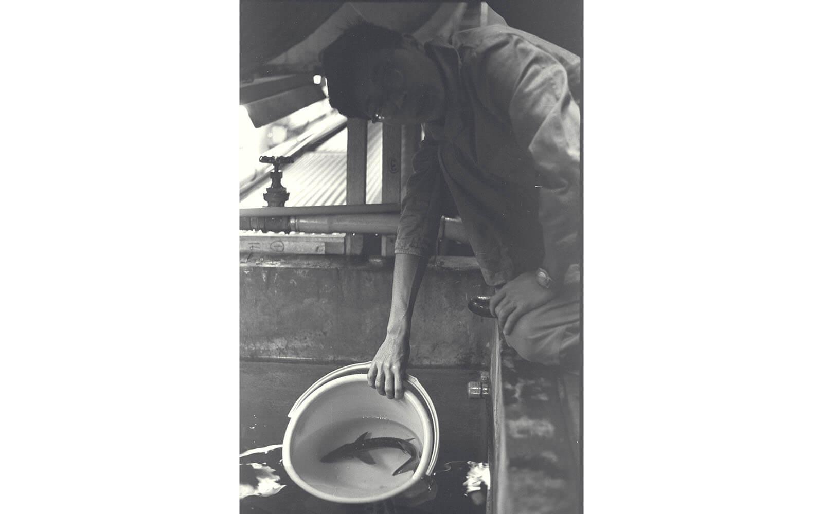 シロチョウザメを水槽へ移す職員