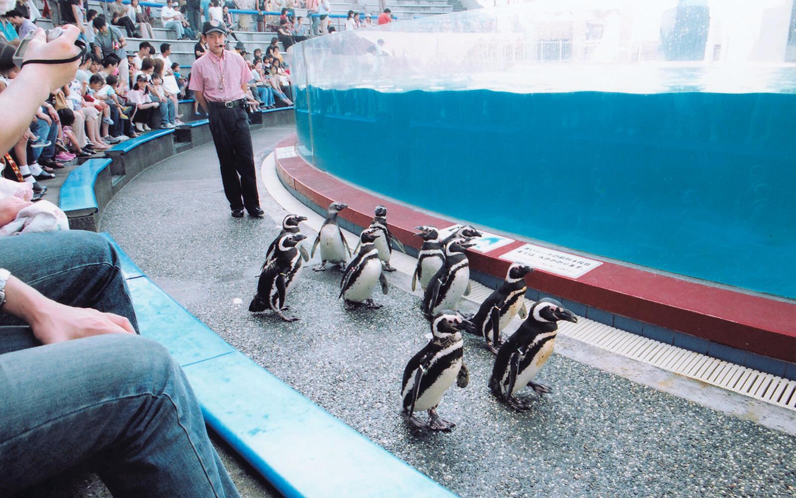 イルカライブ館を歩くマゼランペンギン