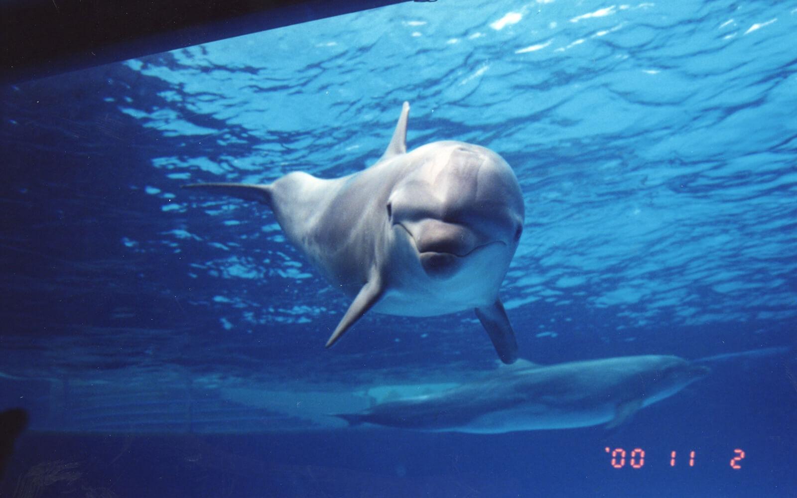 イルカのスマイル