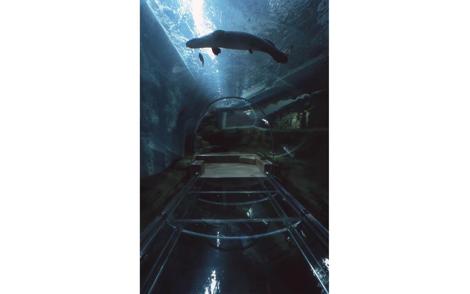 世界初のトンネル水槽が完成